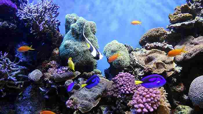 10 دنیای زیر آب برای کاوش در دبی