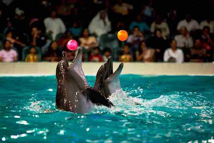 پارک دلفین های دبی - دلفیناریوم
