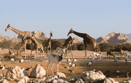 باغ وحش العین