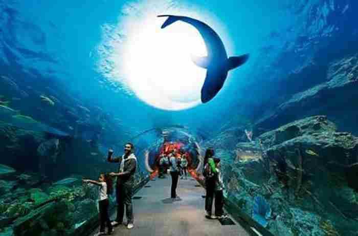 دیدن زندگی دریایی در آکواریوم دبی