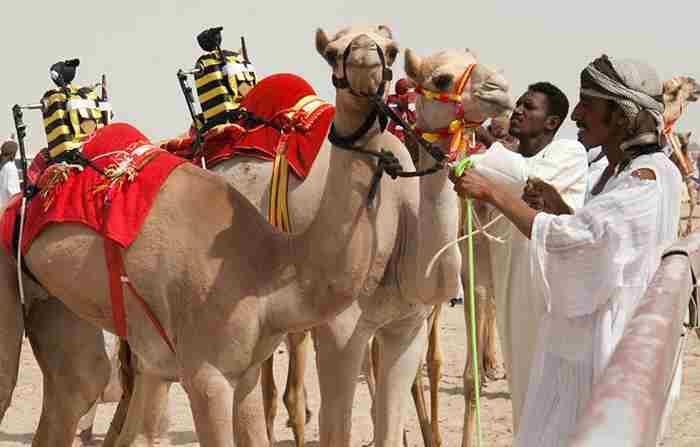 شترسواری دبی