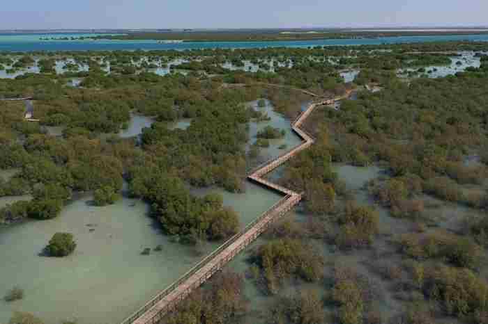 مسیر پیاده روی مانگرو ابوظبی