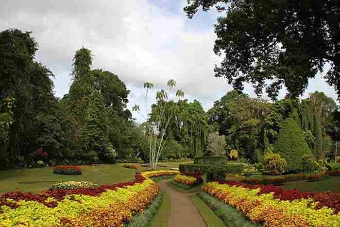 باغهای گیاه شناسی پرادنیا
