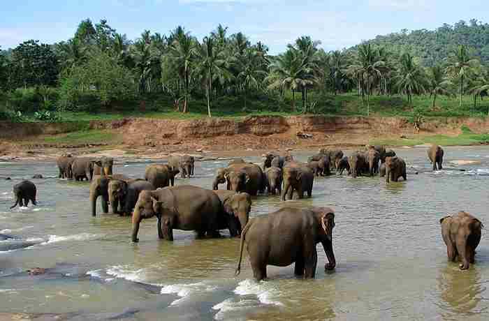 باغ وحش پیناوالا