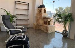 هتل گربه ها در دبی