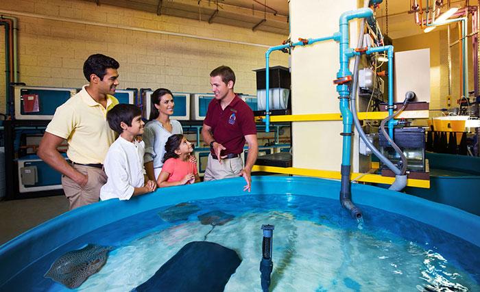 بیمارستان آبزیان دبی و ایدهای برای محافظت از زیستبوم دریایی