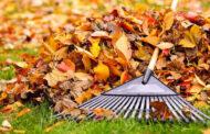چگونه از برگ های زرد و خشک پاییزی استفاده کنیم